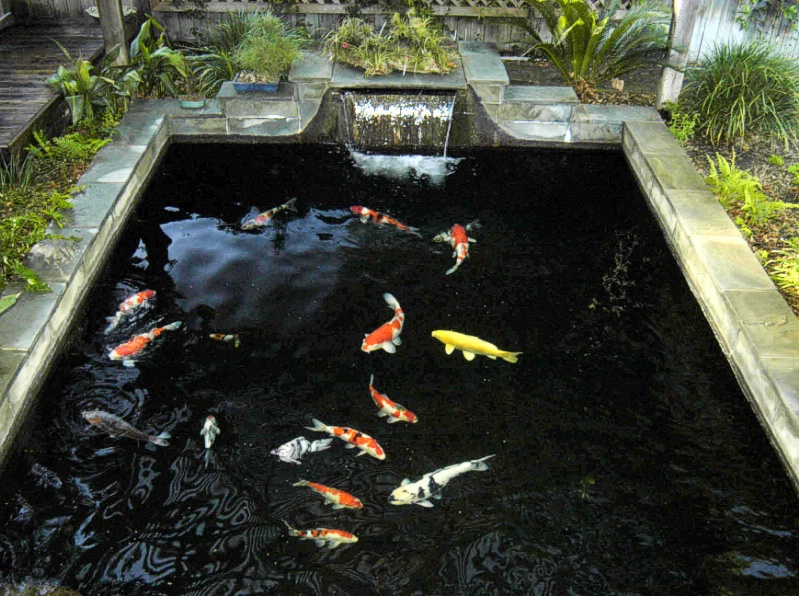 Garden ponds landscaping koi for Backyard koi pond designs